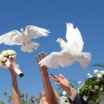 svadebnye-golubi
